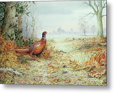 Cock Pheasant  Metal Print by Carl Donner