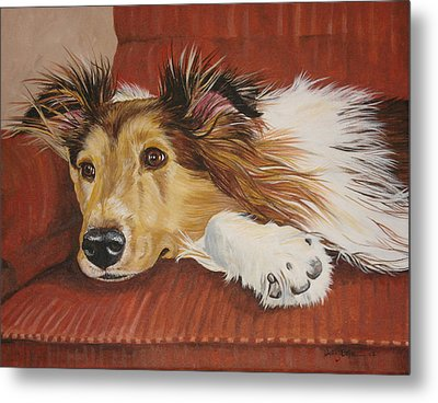 Collie On A Couch Metal Print by Laura Bolle