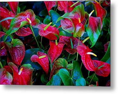 Metal Print featuring the photograph Color Blast by Nancy Bradley