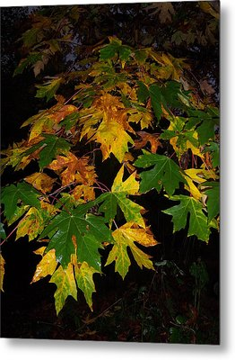 Color Me Fall Metal Print by Ken Day