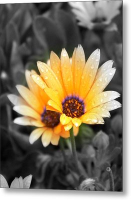 Color My Petals Metal Print