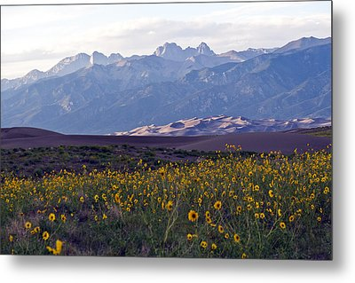 Colorado Style Landscape Sunflowers On The Sangre De Cristos Metal Print by Scotts Scapes