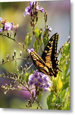 Colorful Butterfly Metal Print by Carol Groenen