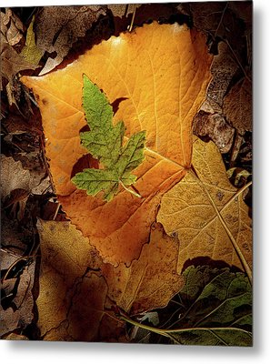 Metal Print featuring the photograph Colors Of Autumn by Marie Leslie