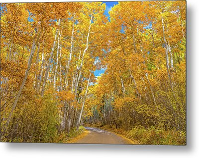 Colors Of Fall Metal Print by Darren White