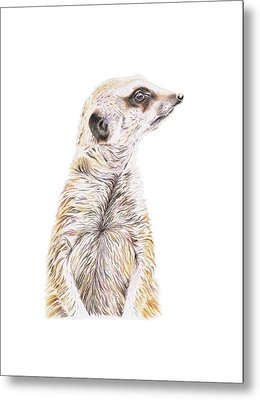 Colour Meerkat Metal Print