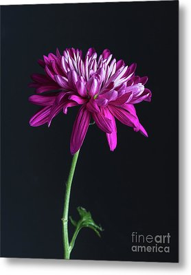 Colour Pop Metal Print