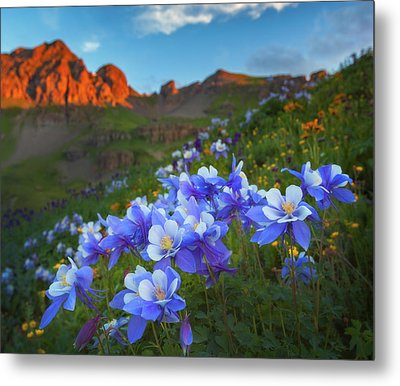 Columbine Sunrise Metal Print