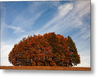 Compact Forest Metal Print by Evgeni Dinev