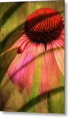 Cone Flower And The Ladybug Metal Print