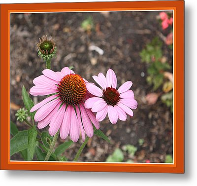 Coneflowers Metal Print by Susan Alvaro