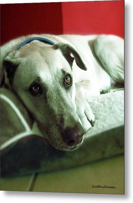 Cooper Goes Cute Artwork Metal Print