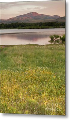 Corepsis Blooming At The Quanah Parker Lake Metal Print by Iris Greenwell