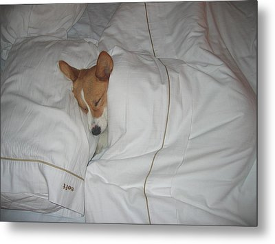 Corgi Sleeping Softly Metal Print by Don Struke