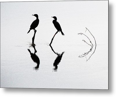 Cormorants At Rest Metal Print