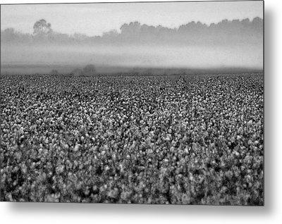Cotton And Fog Metal Print by Michael Thomas