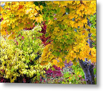 Country Color 15 Metal Print by Will Borden