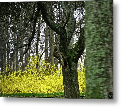Country Spring Forest Metal Print by Debra     Vatalaro
