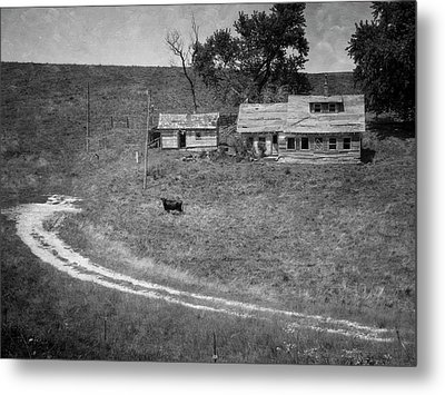 Cow At The Homestead Metal Print