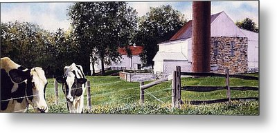 Cow Spotting Metal Print by Denny Bond