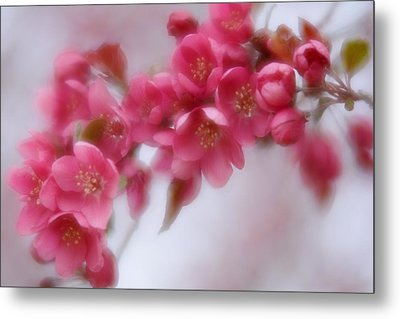 Metal Print featuring the photograph Crabapple Blossom - Dark Pink by Diane Alexander
