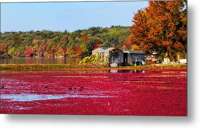 Cranberry Juice Metal Print by Gina Cormier