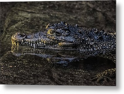 Crocodile Reflections Metal Print