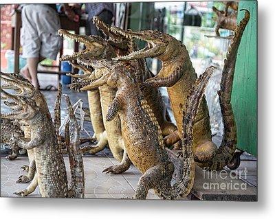 Crocodiles Rock  Metal Print by Chuck Kuhn