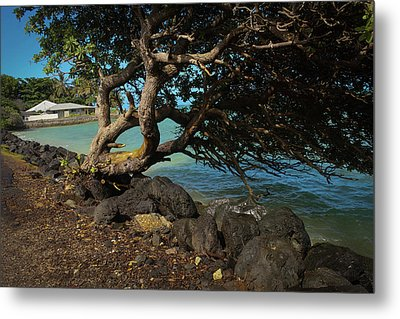Crooked Tree Metal Print