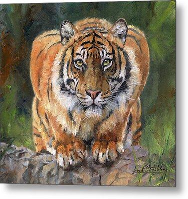Crouching Tiger Metal Print by David Stribbling