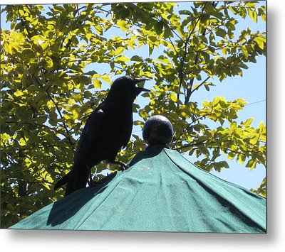 Crow On An Umbrella With Food Metal Print by AJ Brown