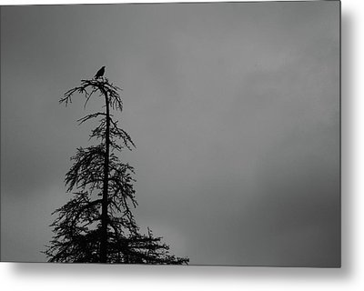 Crow Perched On Tree Top - Black And White Metal Print