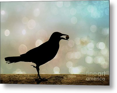 Metal Print featuring the photograph Crow With Pistachio by Benanne Stiens