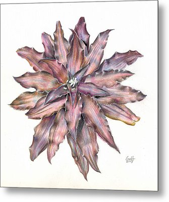 Cryptanthus Star Wars Metal Print