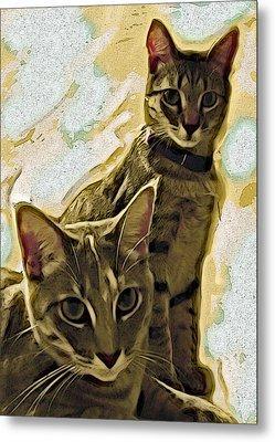 Curious Cats Metal Print by David G Paul