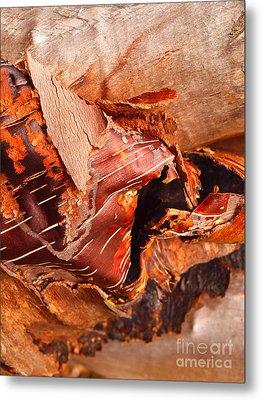 Curled Bark Metal Print by Tara Turner