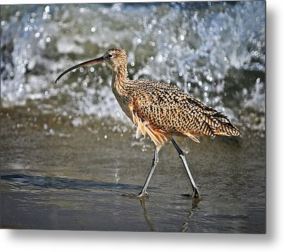 Curlew And Tides Metal Print by William Lee