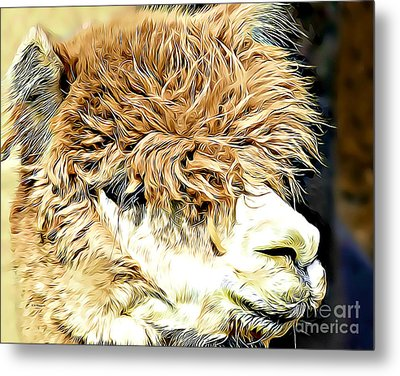 Soft And Shaggy Metal Print by Kathy M Krause