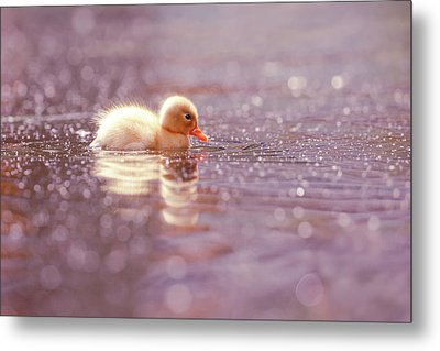 Cute Overload Series - Yellow Duckling Metal Print