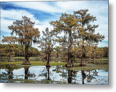 Cypress Expression  Metal Print