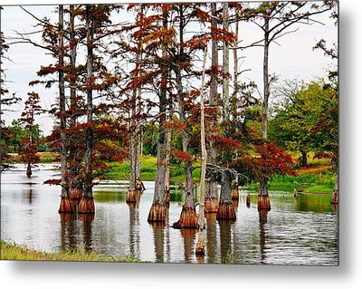 Metal Print featuring the photograph Cypress In Autumn by KayeCee Spain