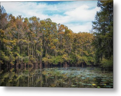 Cypress Jungle Metal Print