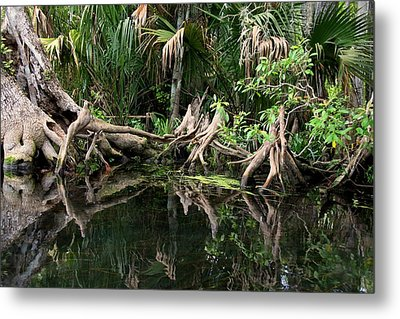 Metal Print featuring the photograph Cypress Swamp  by Barbara Bowen