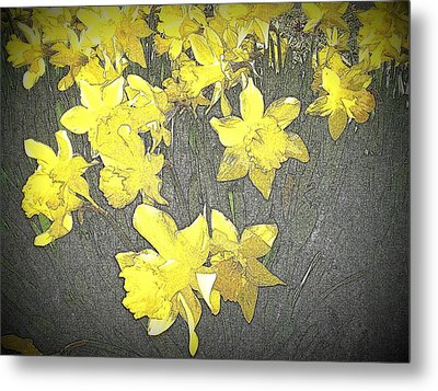Daffodil 2-pencil Etch Metal Print