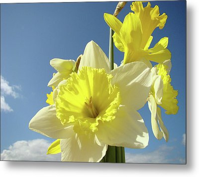 Daffodil Flowers Artwork Floral Photography Spring Flower Art Prints Metal Print by Baslee Troutman