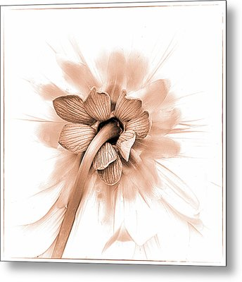 Metal Print featuring the photograph Dahlia Shyness by Julie Palencia