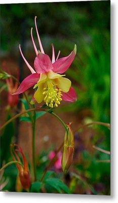 Dainty Flower Metal Print by Amber Lea Starfire