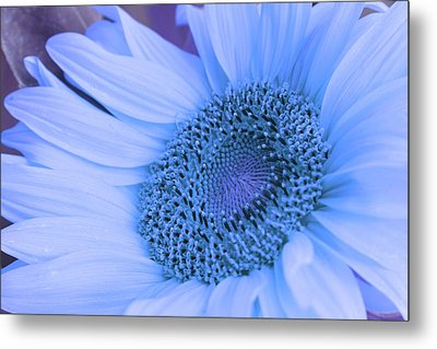 Metal Print featuring the photograph Daisy Blue by Marie Leslie