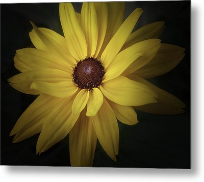 Daisy Metal Print by Tim Reaves