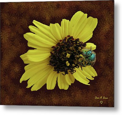 Metal Print featuring the photograph Daisy With Bee  by Donna Brown